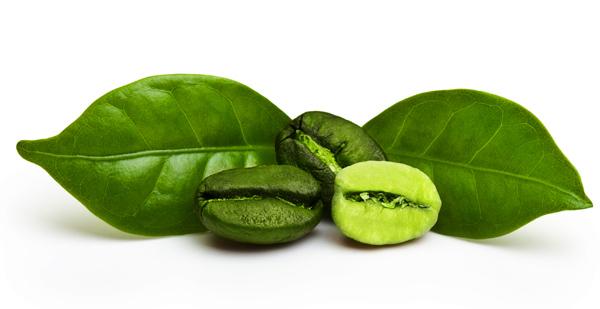 Graines de café vert