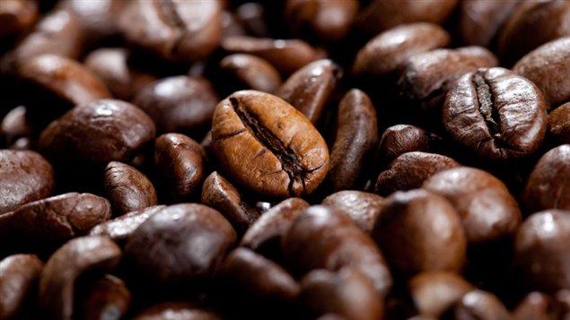 Les graines de café, source du café noir pour maigrir